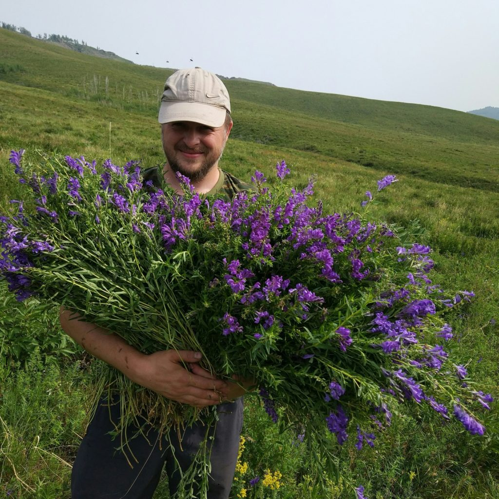 Травы Сибири и Забайкалья